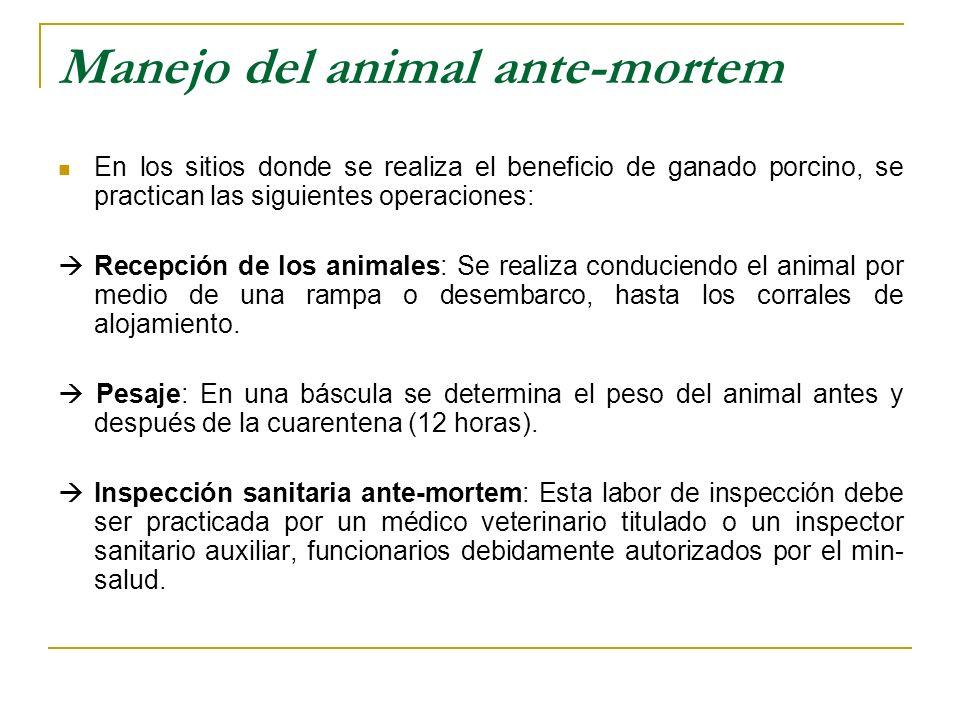 Manejo del animal ante-mortem En los sitios donde se realiza el beneficio de ganado porcino, se practican las siguientes operaciones: Recepción de los