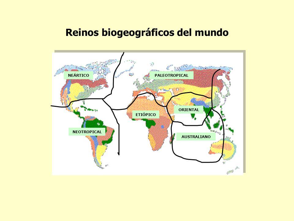 NEÁRTICO NEOTROPICAL PALEOTROPICAL ETIÓPICO ORIENTAL AUSTRALIANO Reinos biogeográficos del mundo