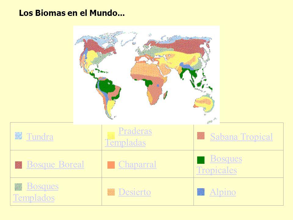Tundra Praderas TempladasPraderas Templadas Sabana Tropical Bosque Boreal Chaparral Bosques TropicalesBosques Tropicales Bosques TempladosBosques Temp