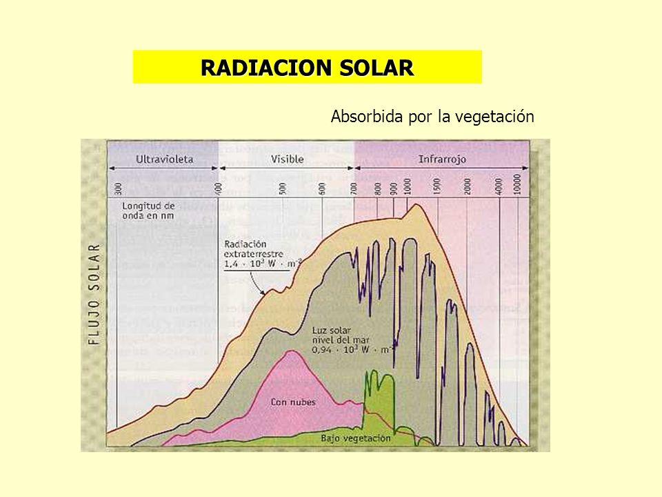 RADIACION SOLAR Absorbida por la vegetación
