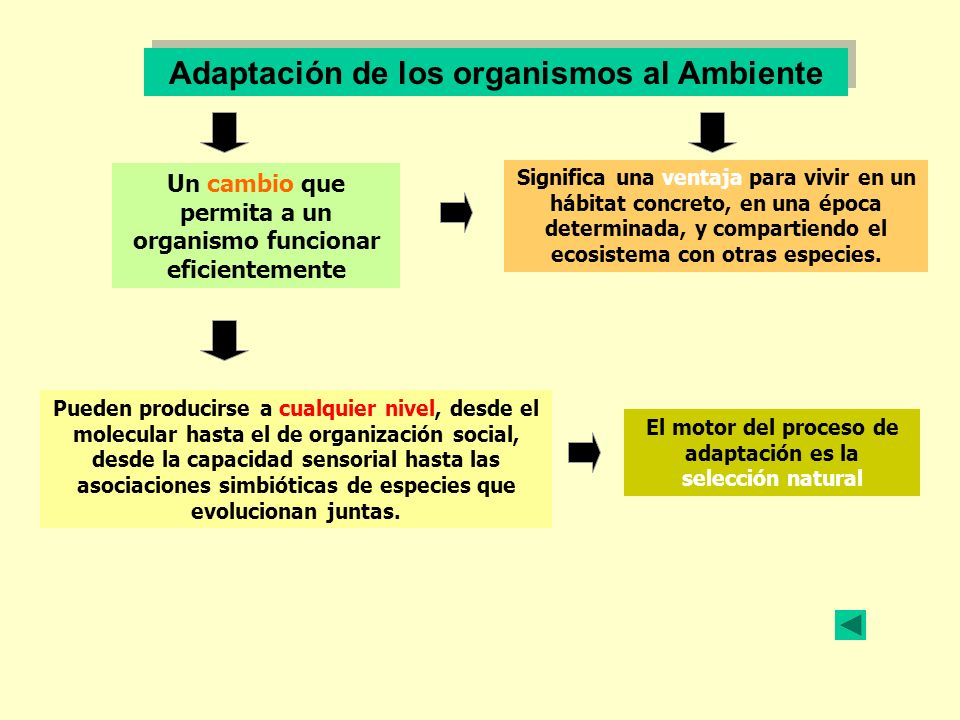 Adaptación de los organismos al Ambiente Un cambio que permita a un organismo funcionar eficientemente Significa una ventaja para vivir en un hábitat