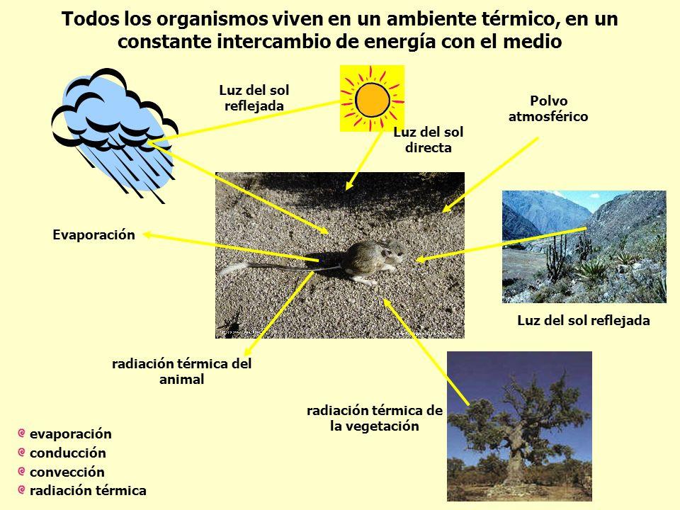 Todos los organismos viven en un ambiente térmico, en un constante intercambio de energía con el medio Luz del sol directa Luz del sol reflejada Polvo