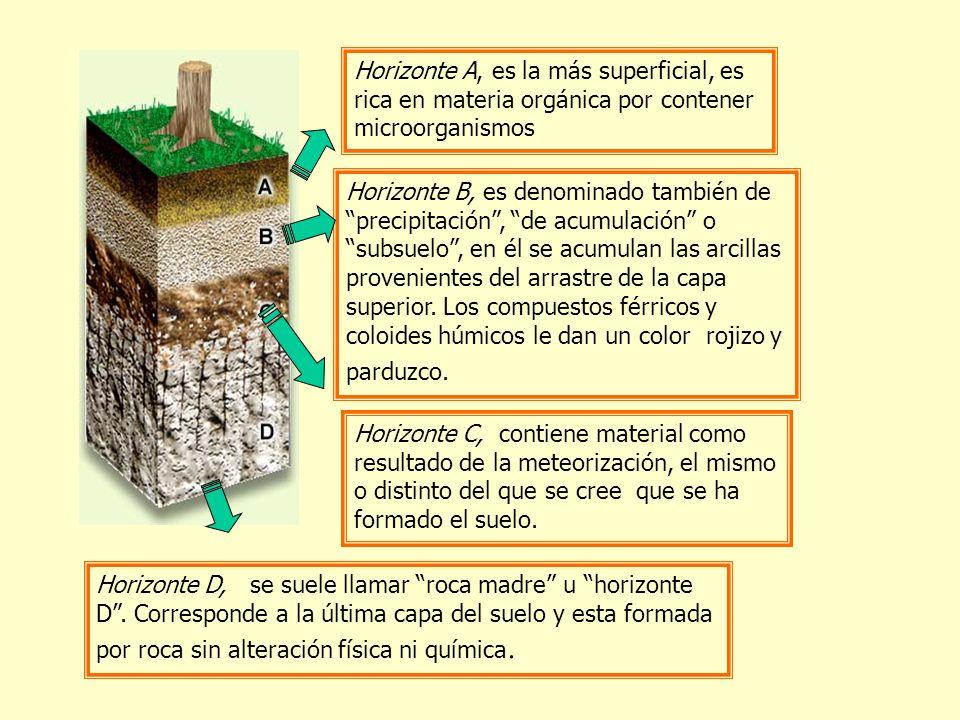 Horizonte A, es la más superficial, es rica en materia orgánica por contener microorganismos Horizonte B, es denominado también de precipitación, de a