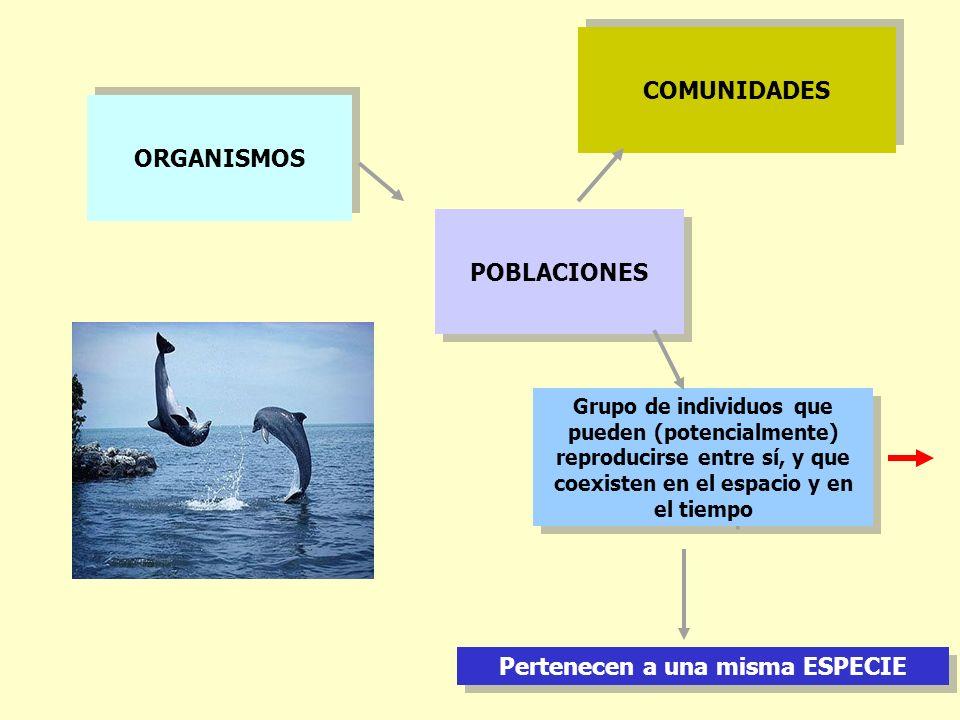 ORGANISMOS POBLACIONES Grupo de individuos que pueden (potencialmente) reproducirse entre sí, y que coexisten en el espacio y en el tiempo Pertenecen