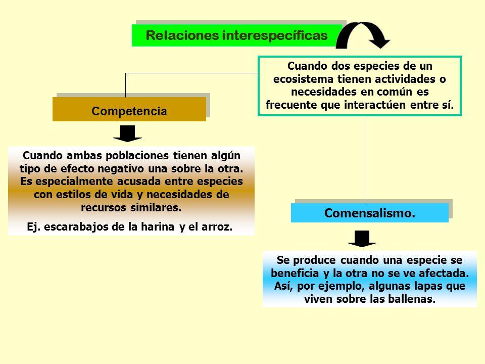 Competencia Relaciones interespecíficas Cuando dos especies de un ecosistema tienen actividades o necesidades en común es frecuente que interactúen en