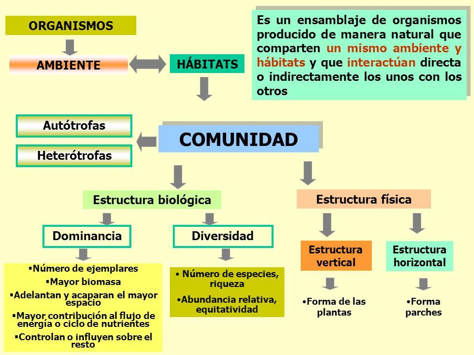 AMBIENTE ORGANISMOS HÁBITATS COMUNIDAD Autótrofas Heterótrofas Estructura biológica Estructura física Dominancia Número de ejemplares Mayor biomasa Ad