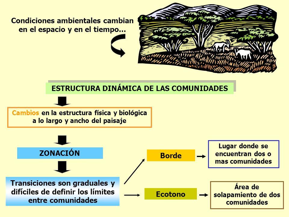 Condiciones ambientales cambian en el espacio y en el tiempo... ESTRUCTURA DINÁMICA DE LAS COMUNIDADES Cambios en la estructura física y biológica a l
