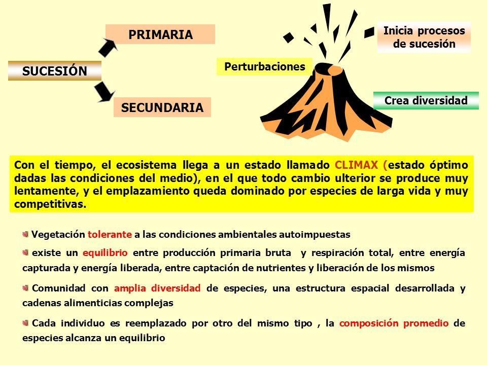 SUCESIÓN PRIMARIA SECUNDARIA Perturbaciones Inicia procesos de sucesión Crea diversidad Con el tiempo, el ecosistema llega a un estado llamado CLIMAX