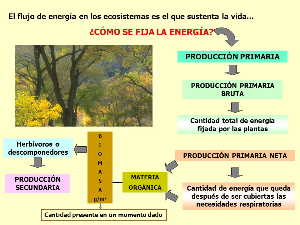 El flujo de energía en los ecosistemas es el que sustenta la vida... Cantidad total de energía fijada por las plantas ¿CÓMO SE FIJA LA ENERGÍA? PRODUC