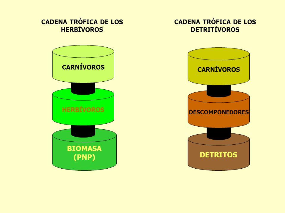 DETRITOS BIOMASA (PNP) HERBÍVOROS CARNÍVOROS DESCOMPONEDORES CARNÍVOROS CADENA TRÓFICA DE LOS HERBÍVOROS CADENA TRÓFICA DE LOS DETRITÍVOROS