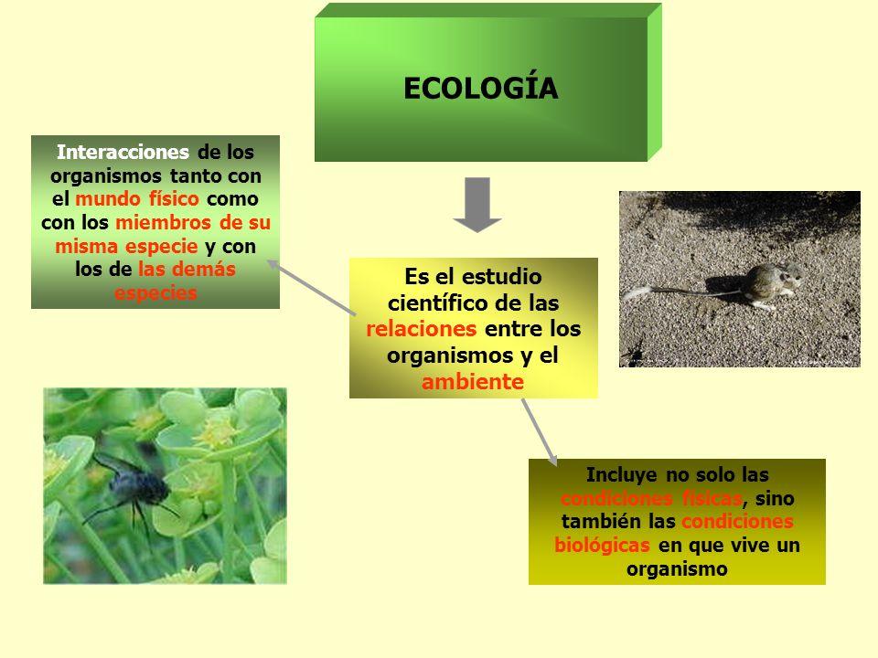 ECOLOGÍA Es el estudio científico de las relaciones entre los organismos y el ambiente Incluye no solo las condiciones físicas, sino también las condi