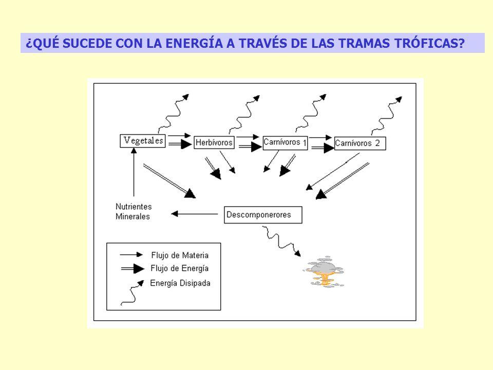 ¿QUÉ SUCEDE CON LA ENERGÍA A TRAVÉS DE LAS TRAMAS TRÓFICAS?
