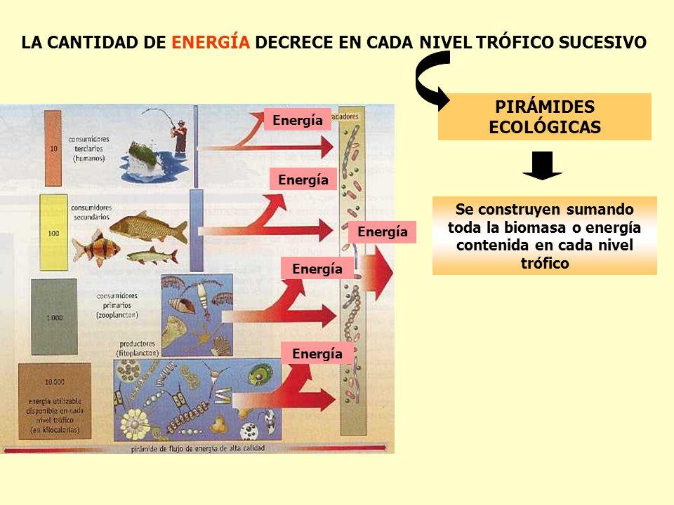 LA CANTIDAD DE ENERGÍA DECRECE EN CADA NIVEL TRÓFICO SUCESIVO PIRÁMIDES ECOLÓGICAS Se construyen sumando toda la biomasa o energía contenida en cada n