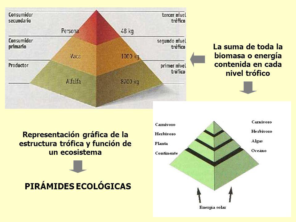 PIRÁMIDES ECOLÓGICAS Representación gráfica de la estructura trófica y función de un ecosistema La suma de toda la biomasa o energía contenida en cada