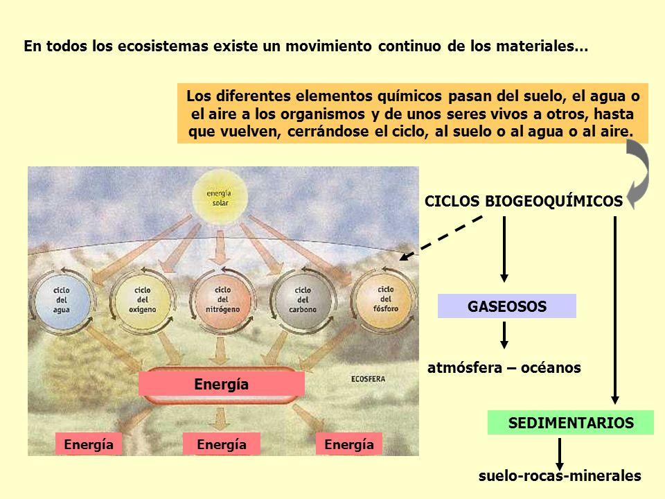 CICLOS BIOGEOQUÍMICOS En todos los ecosistemas existe un movimiento continuo de los materiales... Los diferentes elementos químicos pasan del suelo, e