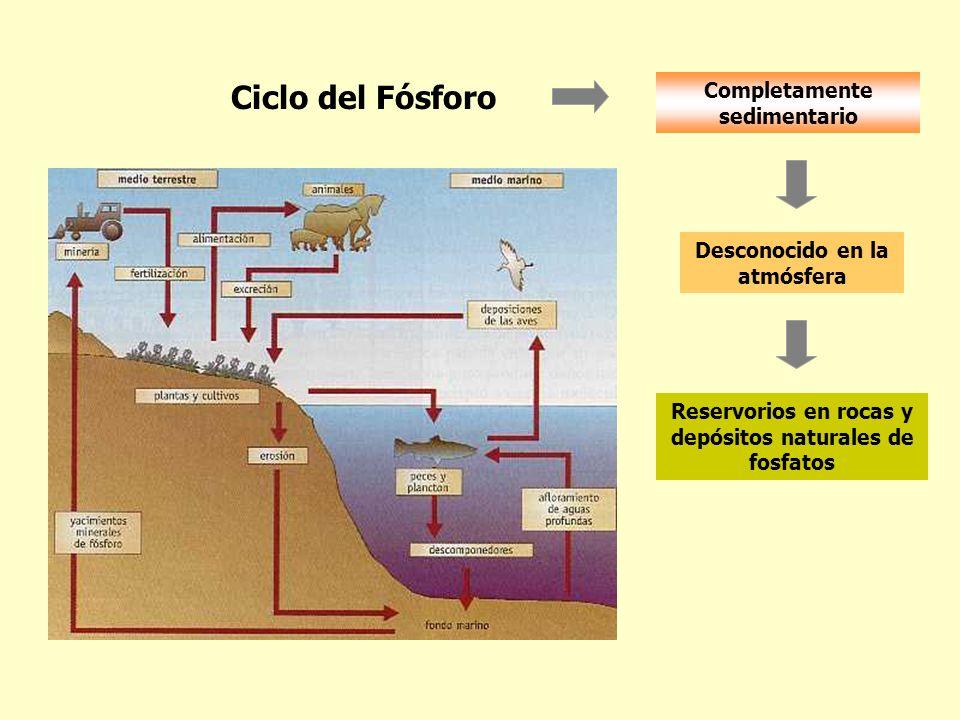 Ciclo del Fósforo Completamente sedimentario Reservorios en rocas y depósitos naturales de fosfatos Desconocido en la atmósfera
