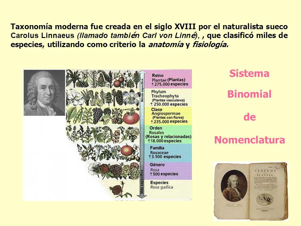 Taxonomía moderna fue creada en el siglo XVIII por el naturalista sueco Carolus Linnaeus (llamado tambi é n Carl von Linn é ),, que clasificó miles de