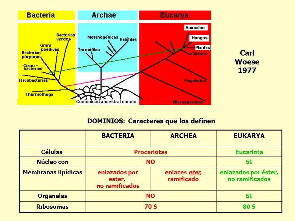 DOMINIOS: Caracteres que los definen BACTERIAARCHEAEUKARYA Células ProcariotasEucariota Núcleo conNOSI Membranas lipídicasenlazados por ester, no rami