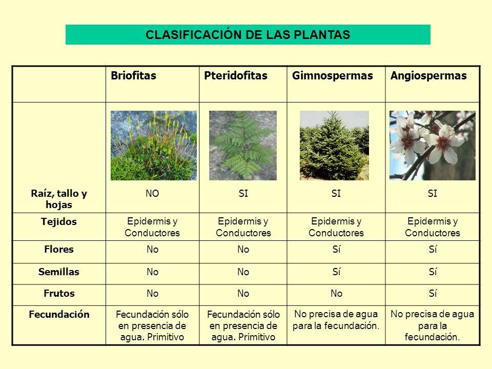 BriofitasPteridofitasGimnospermasAngiospermas Raíz, tallo y hojas NOSI Tejidos Epidermis y Conductores FloresNo Sí SemillasNo Sí FrutosNo Sí Fecundaci