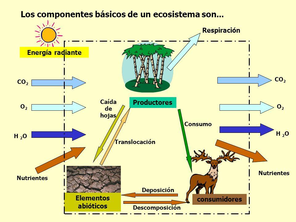 Los componentes básicos de un ecosistema son... Elementos abióticos Productores consumidores Energía radiante Respiración Nutrientes CO 2 O2O2 H 2 O C