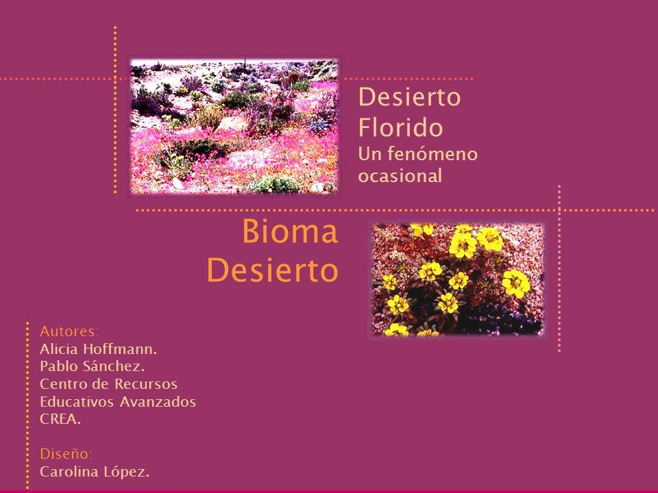 Desierto Florido Un fenómeno ocasional Bioma Desierto Autores: Alicia Hoffmann. Pablo Sánchez. Centro de Recursos Educativos Avanzados CREA. Diseño: C
