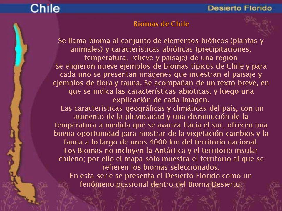 Biomas de Chile Se llama bioma al conjunto de elementos bióticos (plantas y animales) y características abióticas (precipitaciones, temperatura, relie