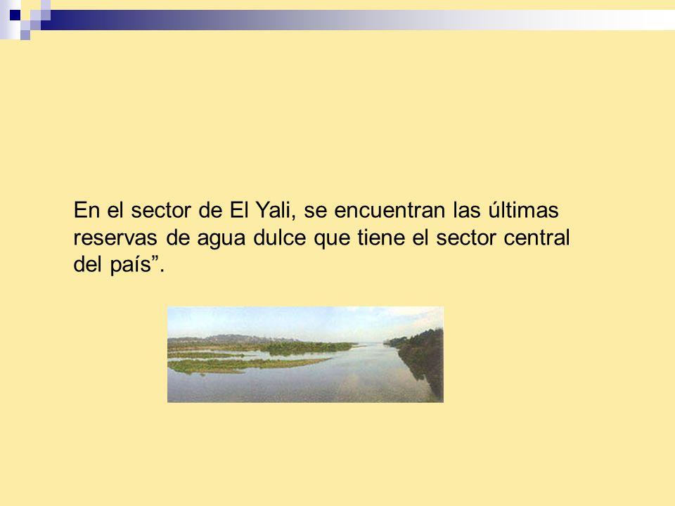 En el sector de El Yali, se encuentran las últimas reservas de agua dulce que tiene el sector central del país.