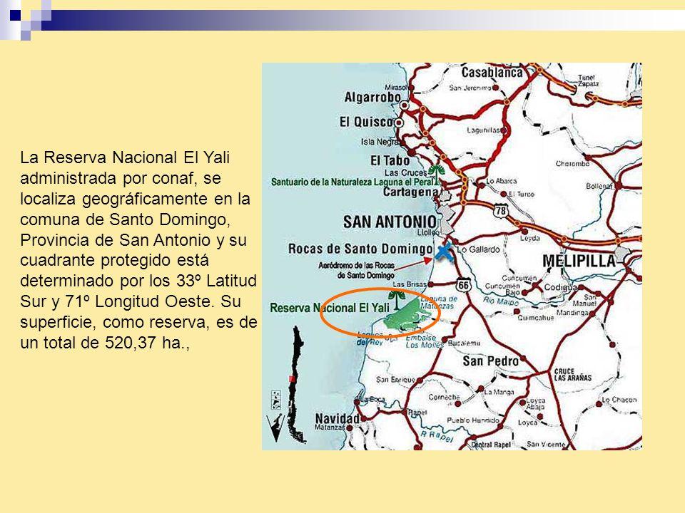 La Reserva Nacional El Yali administrada por conaf, se localiza geográficamente en la comuna de Santo Domingo, Provincia de San Antonio y su cuadrante