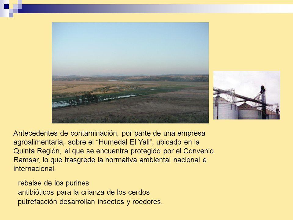 Antecedentes de contaminación, por parte de una empresa agroalimentaria, sobre el Humedal El Yali, ubicado en la Quinta Región, el que se encuentra pr