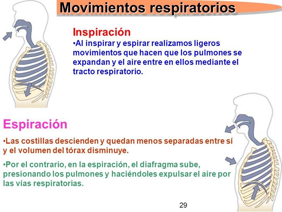 17 Movimientos respiratorios Inspiración Al inspirar y espirar realizamos ligeros movimientos que hacen que los pulmones se expandan y el aire entre en ellos mediante el tracto respiratorio.