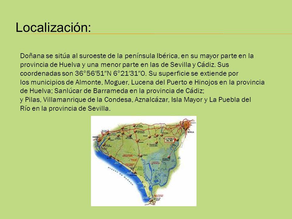 Localización: Doñana se sitúa al suroeste de la península Ibérica, en su mayor parte en la provincia de Huelva y una menor parte en las de Sevilla y C