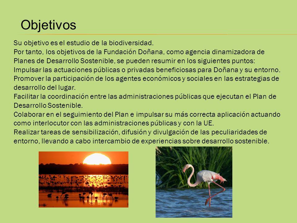 Objetivos Su objetivo es el estudio de la biodiversidad. Por tanto, los objetivos de la Fundación Doñana, como agencia dinamizadora de Planes de Desar