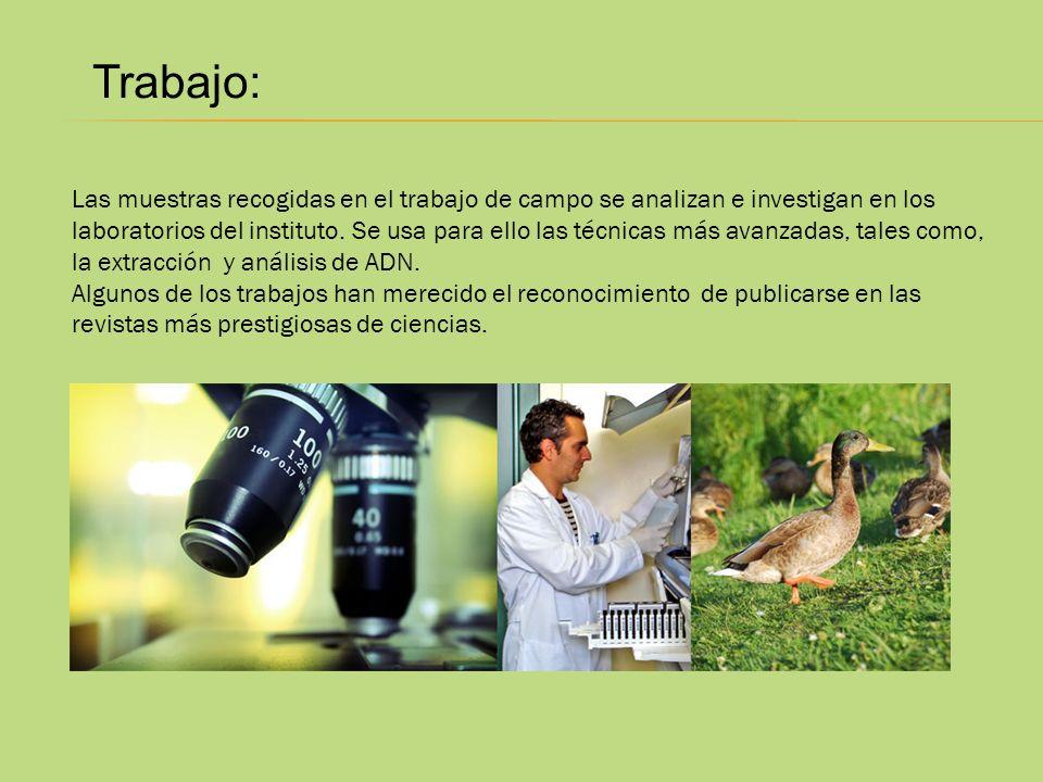 Trabajo: Las muestras recogidas en el trabajo de campo se analizan e investigan en los laboratorios del instituto. Se usa para ello las técnicas más a