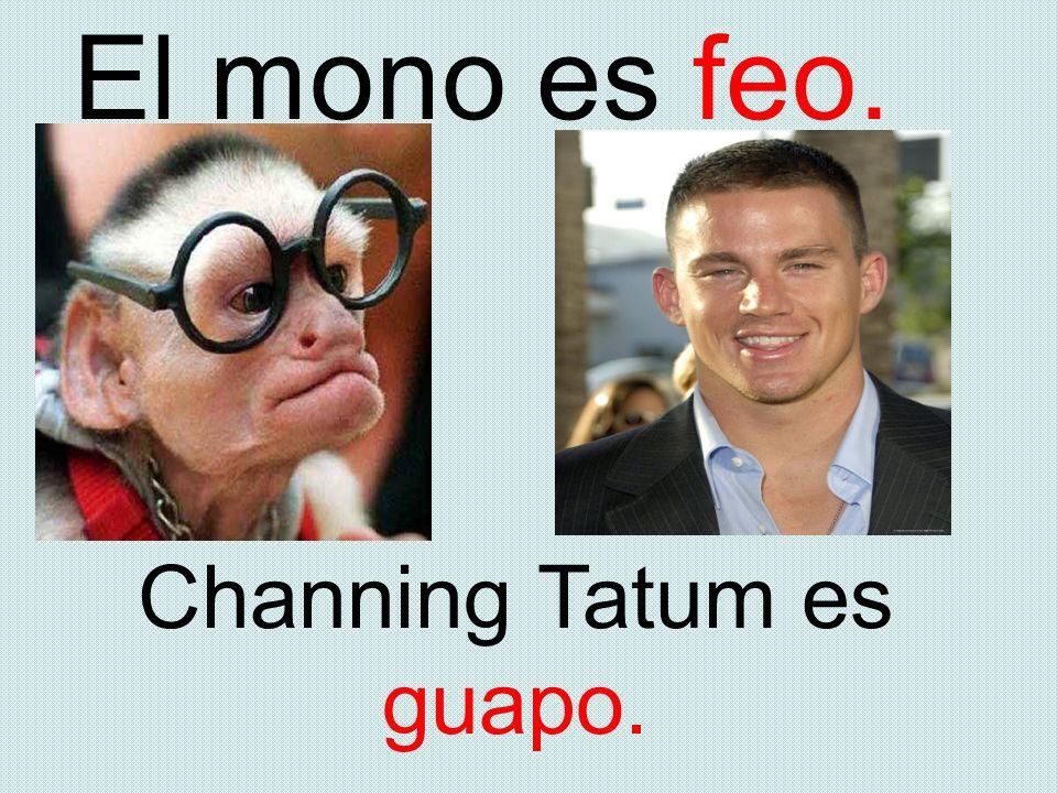 El mono es feo. Channing Tatum es guapo.