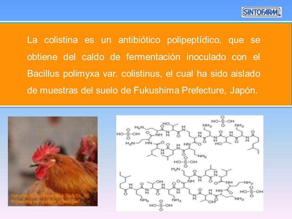 La colistina es un antibiótico polipeptídico, que se obtiene del caldo de fermentación inoculado con el Bacillus polimyxa var. colistinus, el cual ha