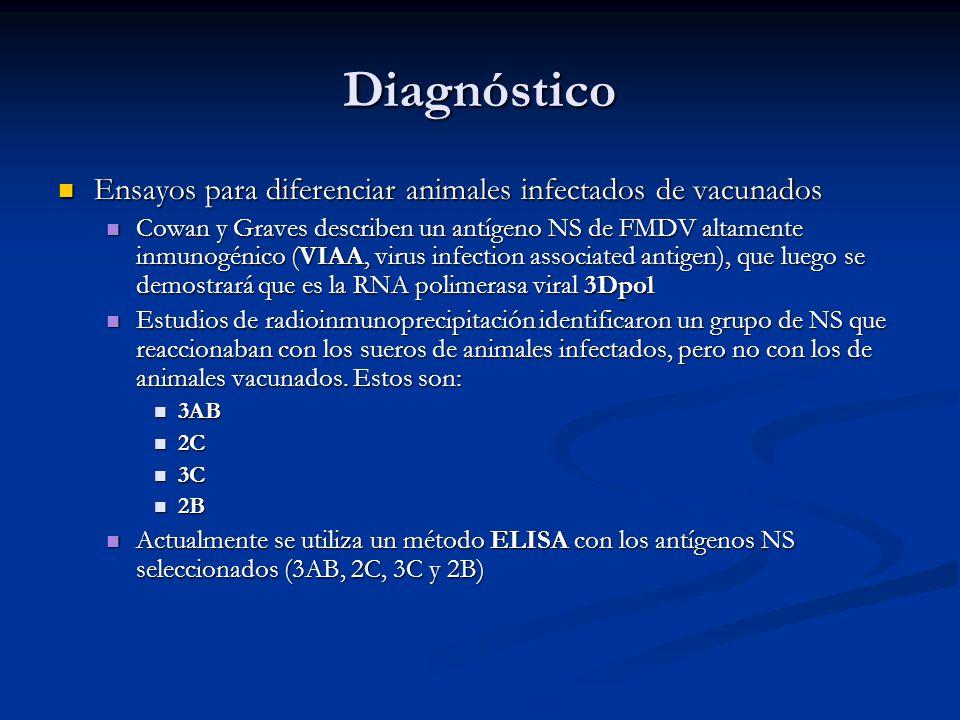 Diagnóstico Ensayos para diferenciar animales infectados de vacunados Ensayos para diferenciar animales infectados de vacunados Cowan y Graves describ