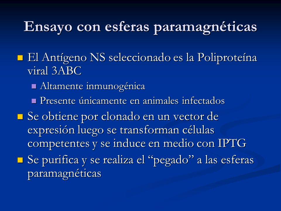 Ensayo con esferas paramagnéticas El Antígeno NS seleccionado es la Poliproteína viral 3ABC El Antígeno NS seleccionado es la Poliproteína viral 3ABC