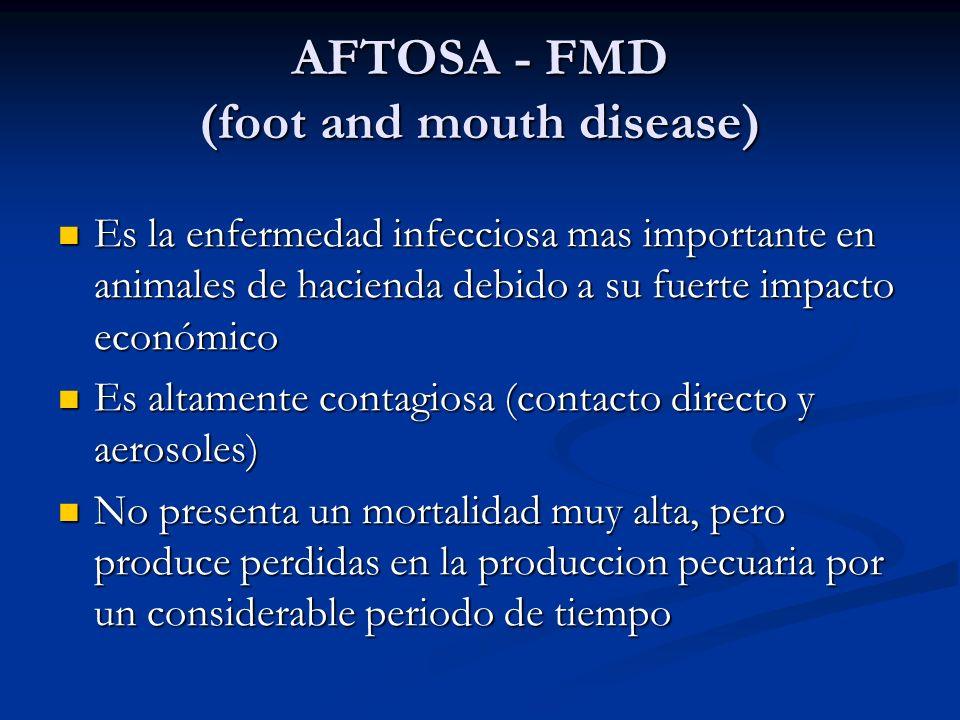 AFTOSA - FMD (foot and mouth disease) Es la enfermedad infecciosa mas importante en animales de hacienda debido a su fuerte impacto económico Es la en