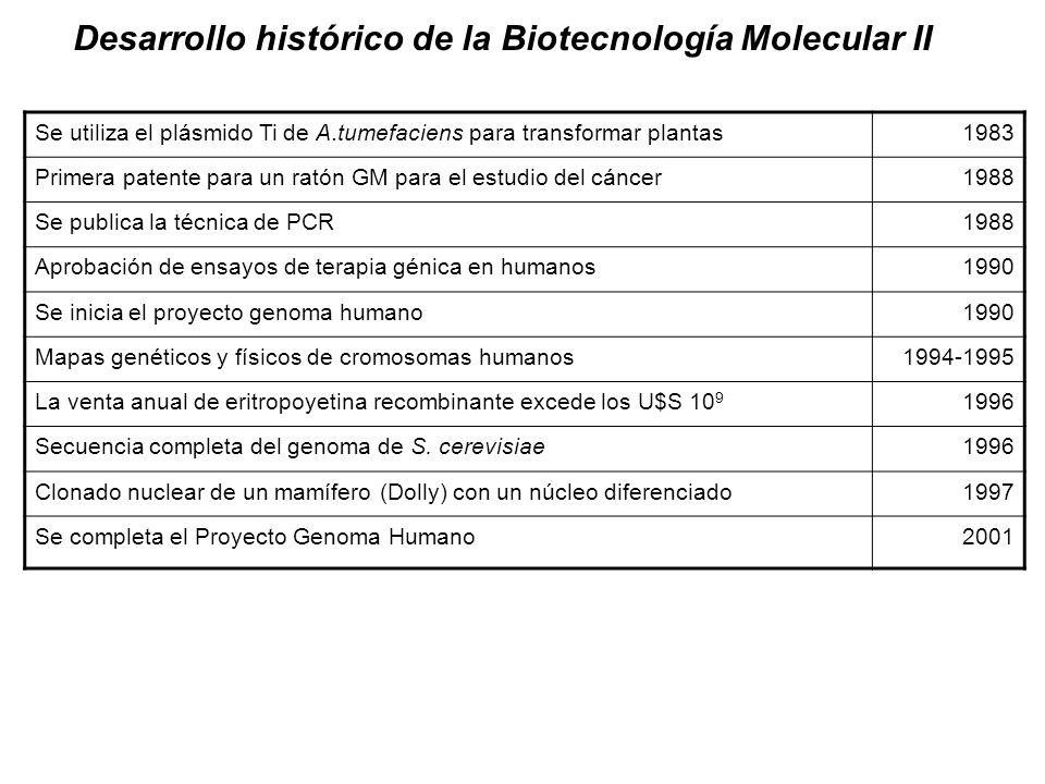 Desarrollo histórico de la Biotecnología Molecular II Se utiliza el plásmido Ti de A.tumefaciens para transformar plantas1983 Primera patente para un