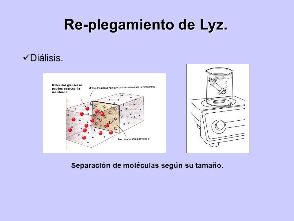 Separación de moléculas según su tamaño. Diálisis. Re-plegamiento de Lyz.