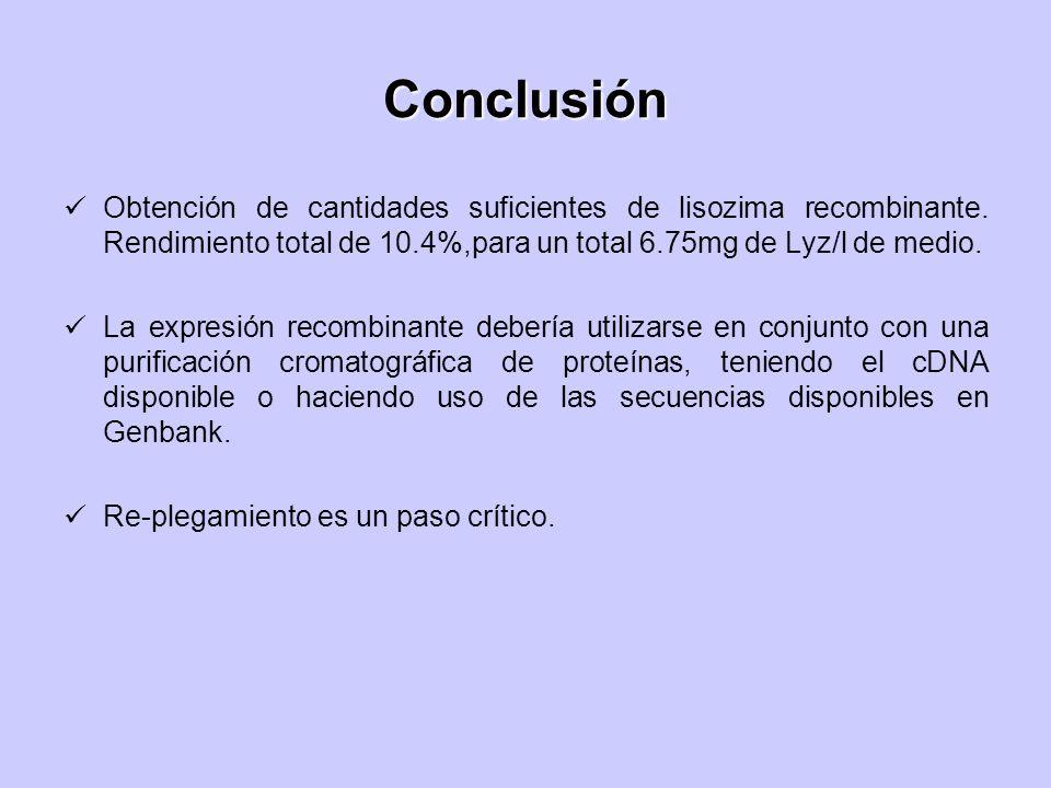 Conclusión Obtención de cantidades suficientes de lisozima recombinante. Rendimiento total de 10.4%,para un total 6.75mg de Lyz/l de medio. La expresi