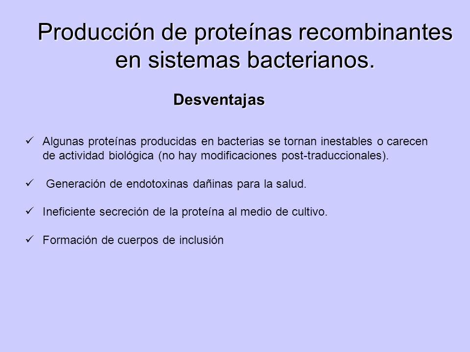 Algunas proteínas producidas en bacterias se tornan inestables o carecen de actividad biológica (no hay modificaciones post-traduccionales). Generació