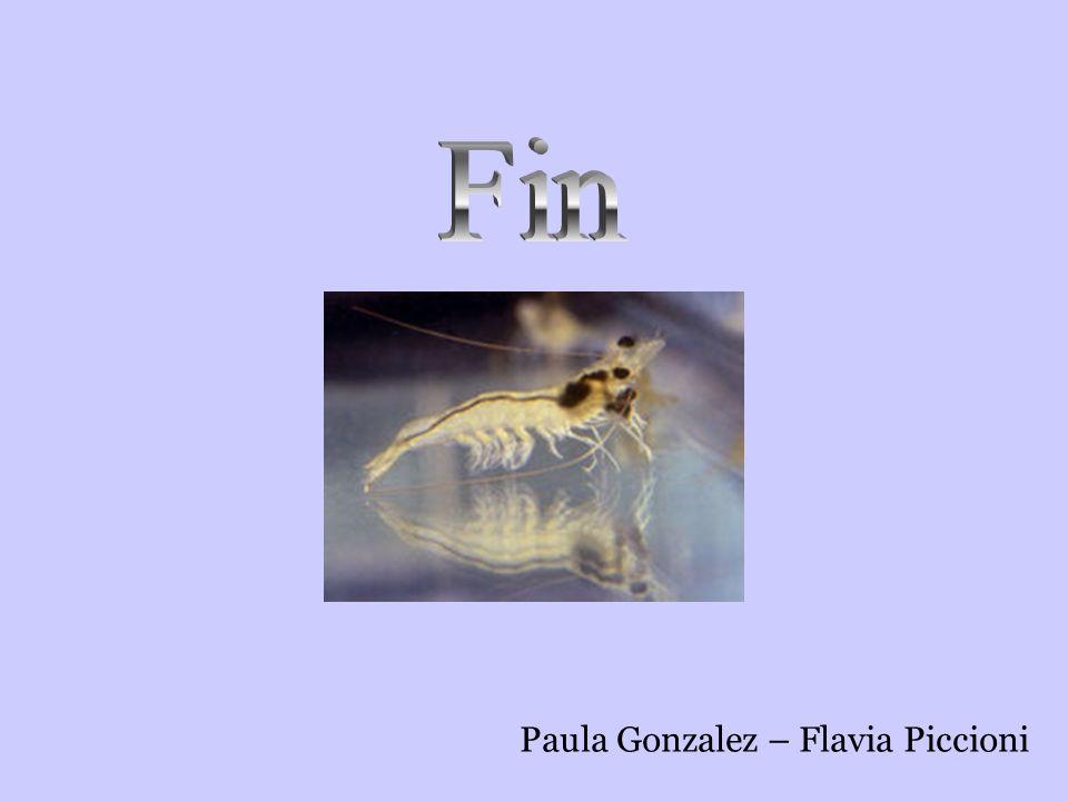 Paula Gonzalez – Flavia Piccioni