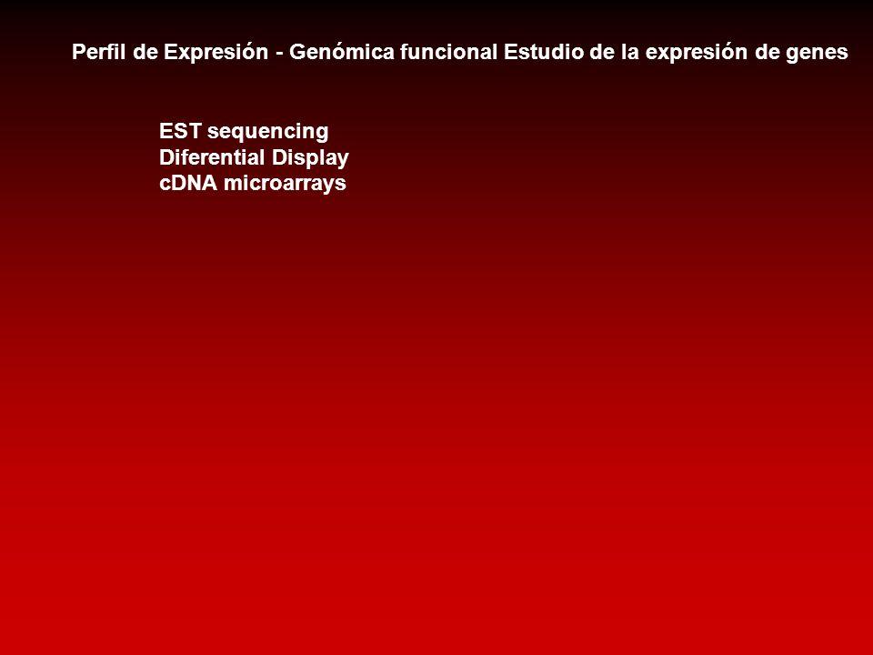 Perfil de Expresión - Genómica funcional Estudio de la expresión de genes EST sequencing Diferential Display cDNA microarrays