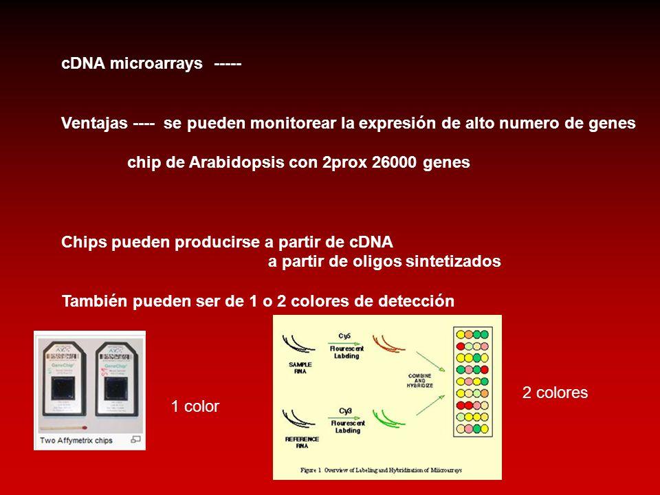 cDNA microarrays ----- Ventajas ---- se pueden monitorear la expresión de alto numero de genes chip de Arabidopsis con 2prox 26000 genes Chips pueden