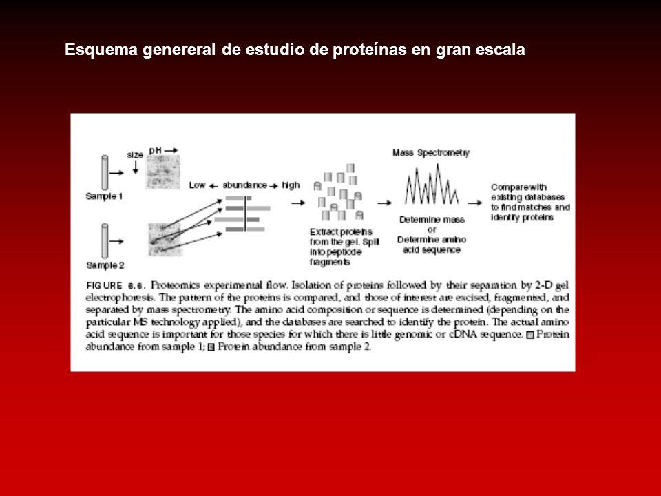 Esquema genereral de estudio de proteínas en gran escala