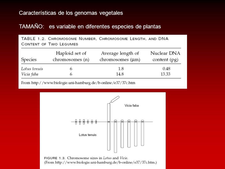 Características de los genomas vegetales TAMAÑO: es variable en diferentes especies de plantas