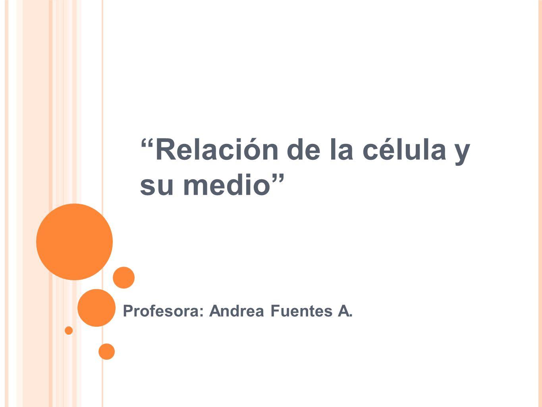 Relación de la célula y su medio Profesora: Andrea Fuentes A.