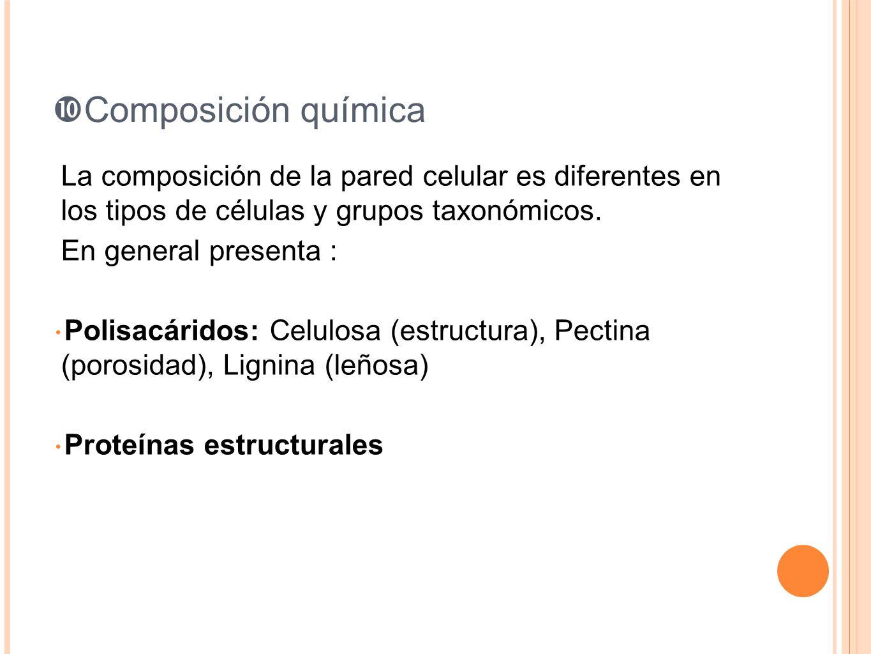 Composición química La composición de la pared celular es diferentes en los tipos de células y grupos taxonómicos. En general presenta : Polisacáridos