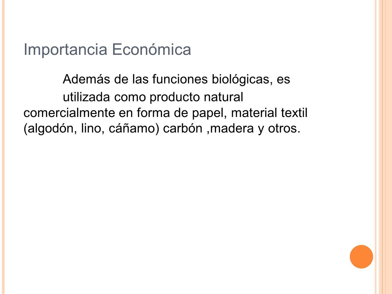 Importancia Económica Además de las funciones biológicas, es utilizada como producto natural comercialmente en forma de papel, material textil (algodó